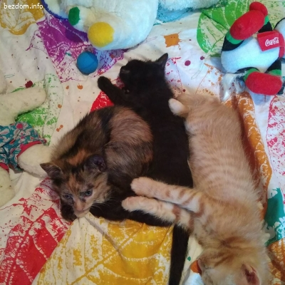Подарявам 3  мили котета