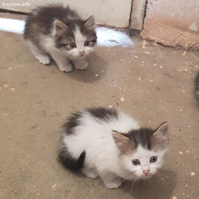 Подарявам 3 малки пухкави котенца