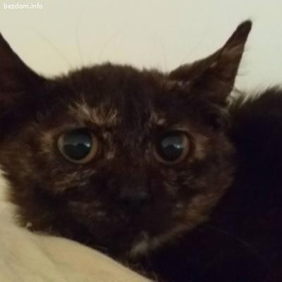 3 котета Търсят своите хора и дом