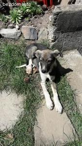 4-5 месечни кученца търсят дом