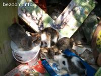4 котенца - осиновени
