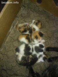 ОСИНОВЕНИ!!! 4 котета търсят постоянен или временен дом
