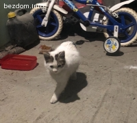 Коте на 4 месеца женско търси дом