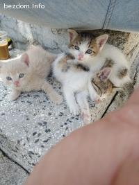 4-малки котенца търсят дом