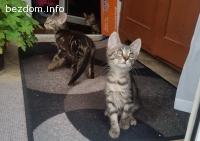 4 малки котенца търсят дом