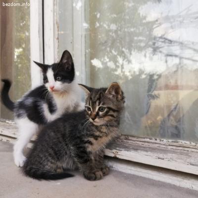 ПОДАРЯВАМ: 4 котенца търсят стопани