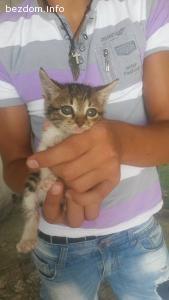 5 бебета котета