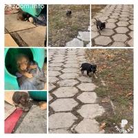 5 кученца си търсят спешно дом