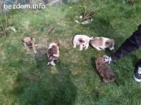Подаряват се 5 малки кученца