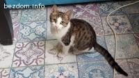 Подарявам малко женско котенце на 5 месеца