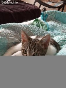 Люблюбилно коте на 5 месеца си търси грижовен стопанин