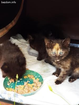 5 черни котенца търсят дом