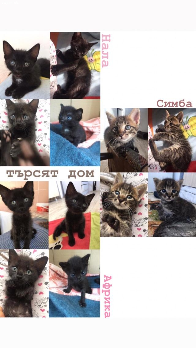 5 котета търсят дом
