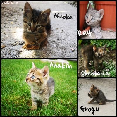 5 котачета спешно търсят временен или постоянен дом