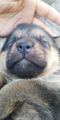 6 малки кучета на около 20 дни .едри и пухкави се подаряват