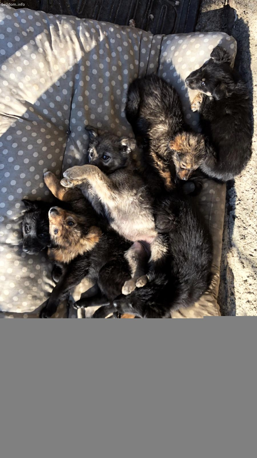 6 кученца от Ботевград