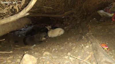 Майка с 6 прекрасни бебета търси дом