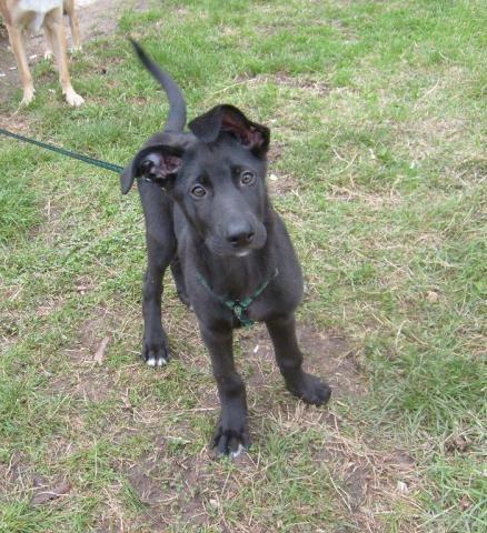 Подарявам кученце на 2 месеца