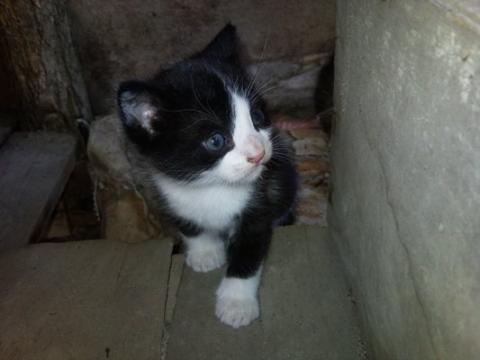 Малки котенца си търсят дом!
