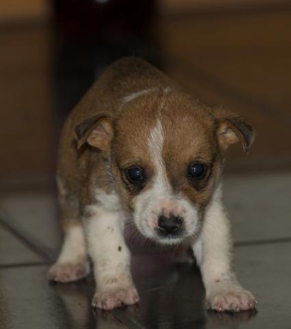 4 малки кученца търсят спасение и дом