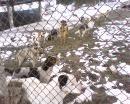 Приют за бездомни животни град Кюстендил