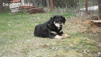 Кученце на 9 месеца