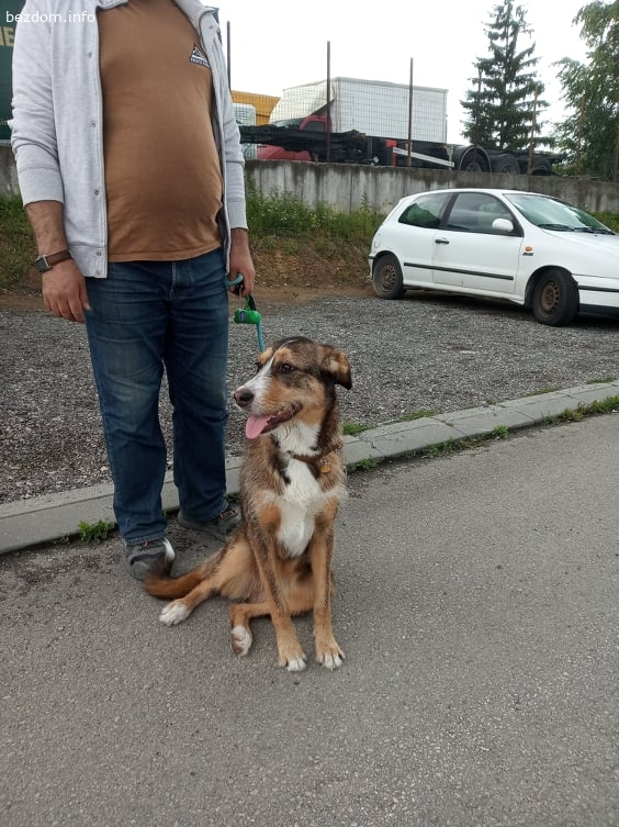 Подарява се СПЕШНО добро куче с ловна порода, ок. 9 месечно!