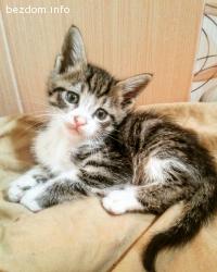 Бебе-коте с розово носле търси дом