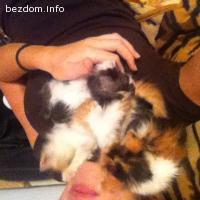 Бебета котета търсят постоянен дом