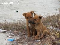 Бездомни кученца на два месеца
