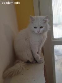 Бианко търси нов дом-осиновен:)