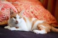 ОСИНОВЕН - гальовен котарак Ескобар / Big Cuddly Cat Escobar