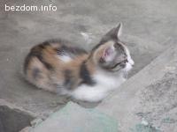 Чаровно малко котенце