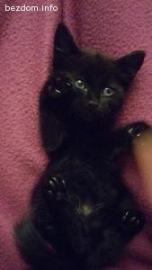 Черен котак заедно с братята си търси дом - Осиновени!!!