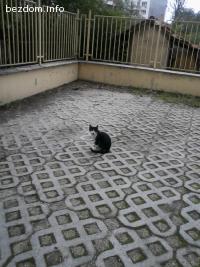 Черни котета носят щастие!