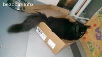 ОСИНОВЕН - Черно коте омагьосва с поглед и характер!