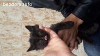 Черно коте ОСИНОВЕНО