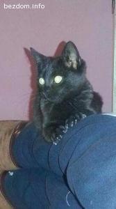 Черно Коте търси дом