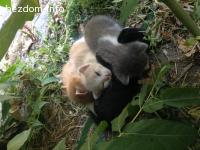 Четери сладки малки котенца