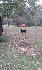 домашно куче се скита