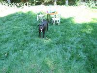 Дребно женско кученце търси дом