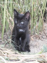 Две черни пантерки-бебоци търсят дом!
