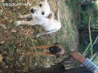 Две кученца търсят стопани
