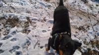 Две кучета се разхождат в района