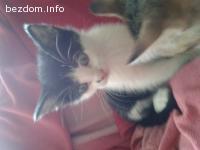 Две прекрасни котета търсят дом--осиновени