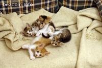 Две женски и две мъжки котета търсят своите стопани