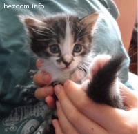 Едно малко котенце