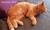 Garfield - Осиновен