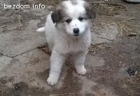 Малко сладко кученце