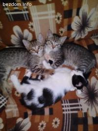 Обезпаразитени котета